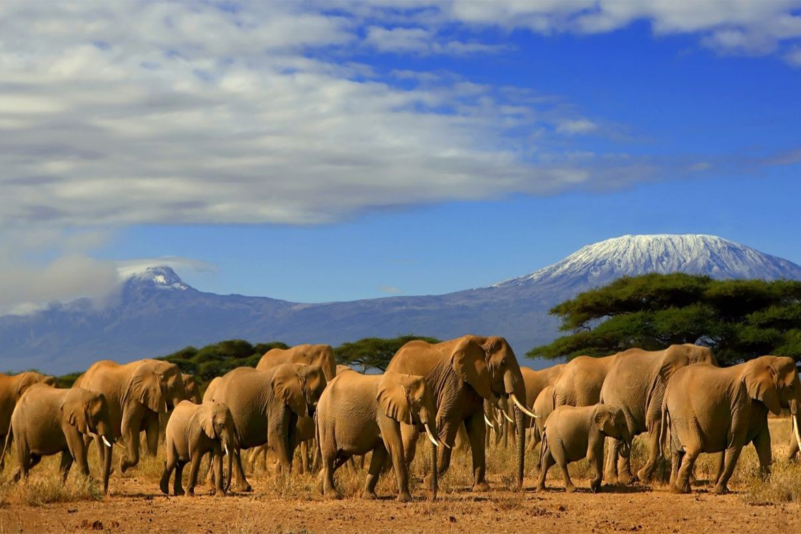 Aboseli National Park