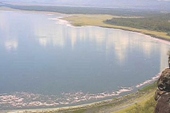 Lake Nakuru & Lake Naivasha Safari3 Days/ 2 Nights